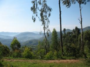 Duizend heuvels met bomen op voorgrond